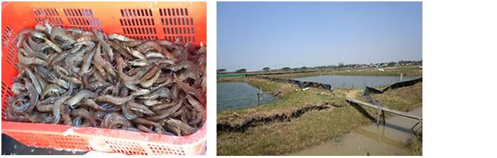 Aquaculture 水産養殖事業